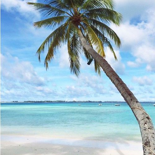 été plage palmier
