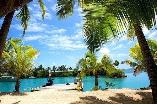 océan et palmier